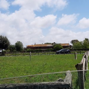 Pollaio-Centro 36